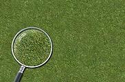 Grass Lawn Hi-Res Texture 01