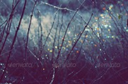 Winter Scene With Spectrum Light Bokeh