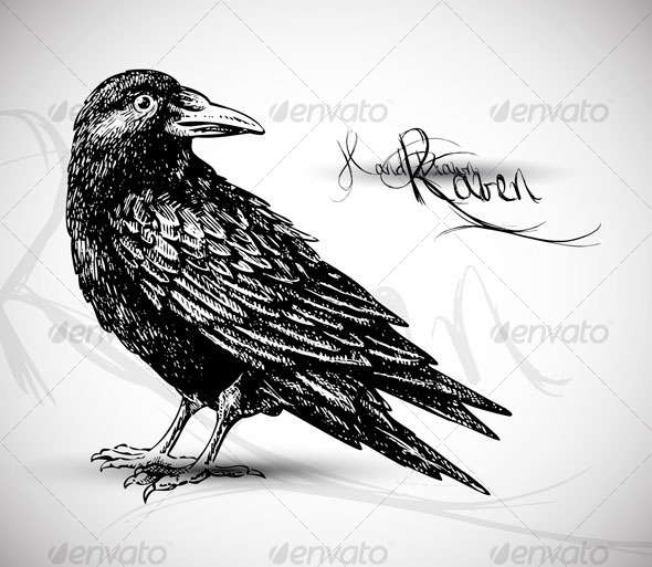 Line Drawing Raven : Drawing of raven