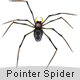 Pointer spider