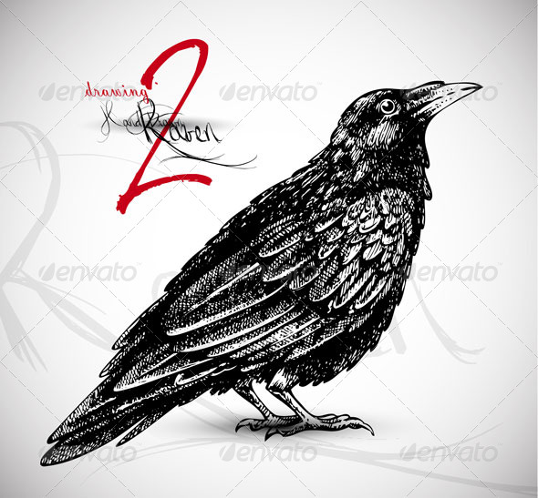 Line Drawing Raven : Raven drawing vector by silvertiger graphicriver