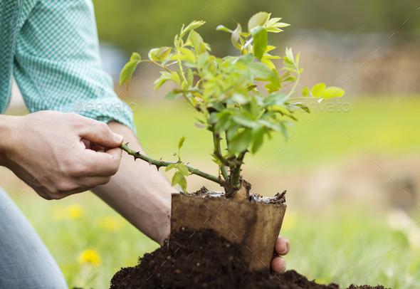 Во сне сажать маленькое дерево 29
