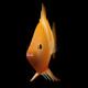 3D Boar Fish