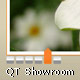 QT Showroom