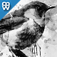 Ink Art Photoshop Action-Graphicriver中文最全的素材分享平台