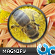 Easy Magnifying Glass 01 AS3
