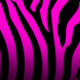 pinkzebra