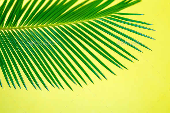tropical background palm trees branches holiday stock photo by