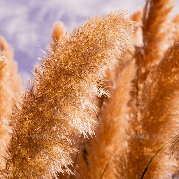 Rye. Details. Minimal nature background art Stock Photo by EvgeniyaPorechenskaya