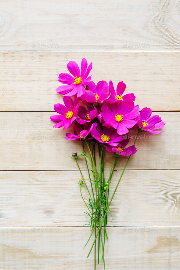 bouquet of cosmos flower Stock Photo by apagafonova | PhotoDune