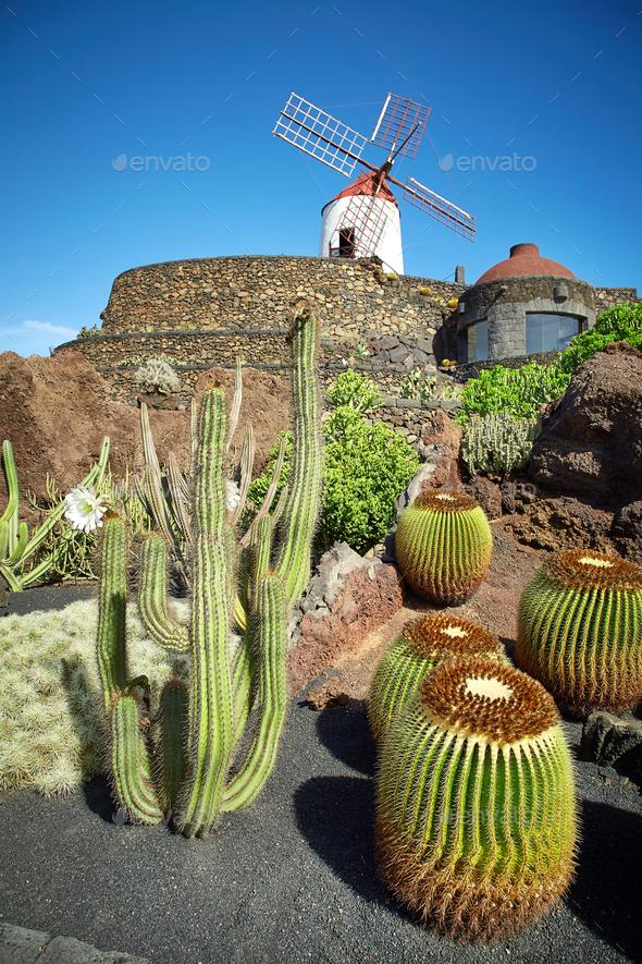 cactus garden jardin de cactus in lanzarote island stock photo by magone - Jardn De Cactus