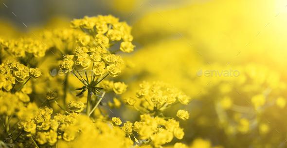 Springtime concept yellow flowers stock photo by elegant01 photodune mightylinksfo