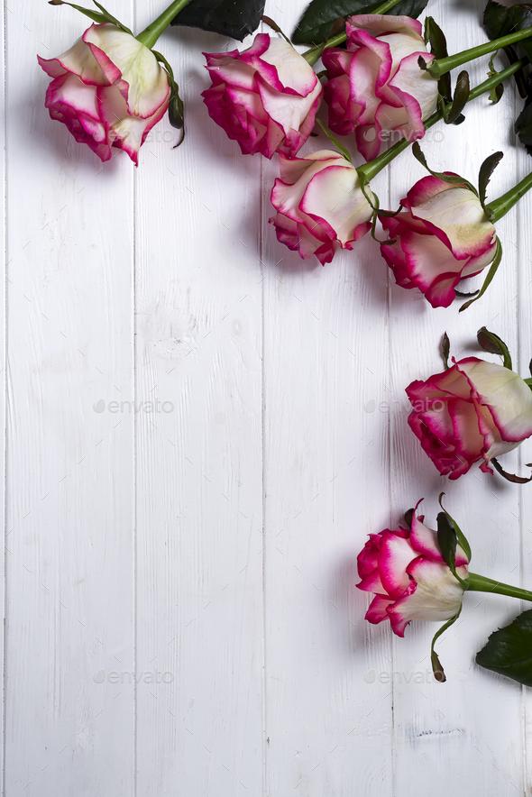 Roses frame on wooden white background Stock Photo by lyulkamazur ...