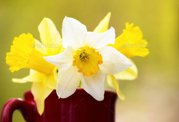 White and yellow easter flowers stock photo by elegant01 photodune mightylinksfo