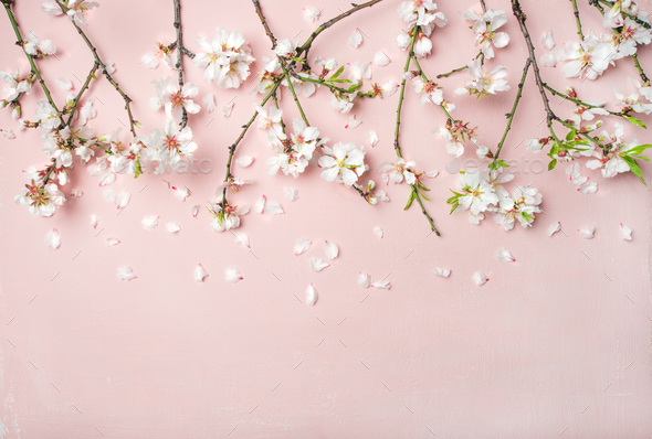 Spring almond blossom flowers and petals over light pink background spring almond blossom flowers and petals over light pink background stock photo images mightylinksfo