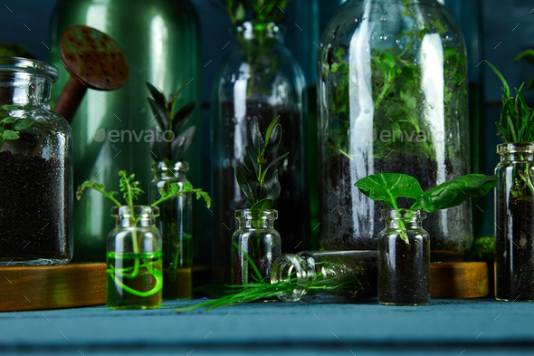 Mini Glass Vases And Bottle With Green Leaves Plants Stock Photo