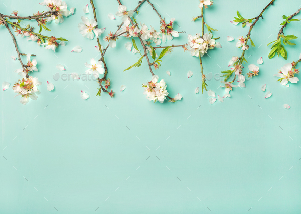 spring almond blossom flowers over light blue background copy space stock photo by sonyakamoz