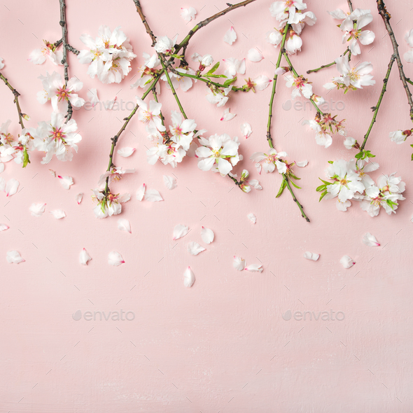 Spring Almond Blossom Flowers Over Light Pink Background, Square Crop Stock  Photo By Sonyakamoz