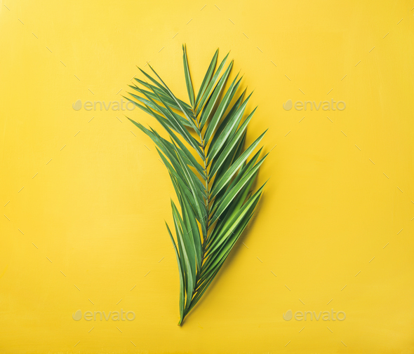 green palm branch over bright yellow background top view stock