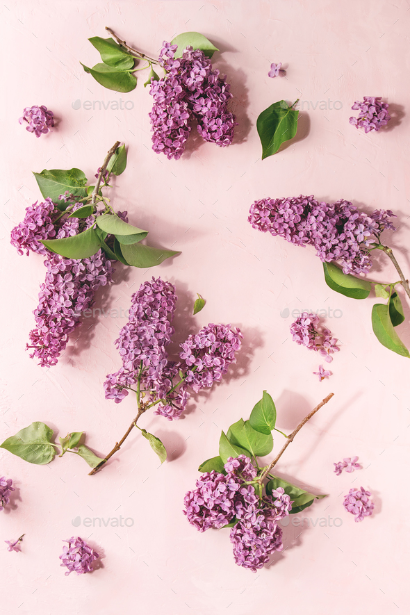 Lilac flowers over pink stock photo by natashabreen photodune lilac flowers over pink stock photo images mightylinksfo Gallery