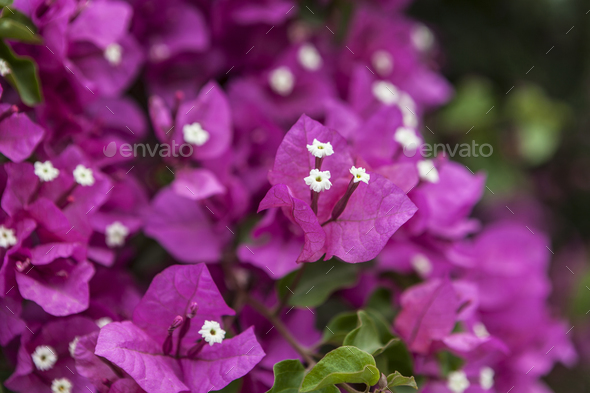Sweet pink flowers stock photo by orcearo photodune sweet pink flowers stock photo images mightylinksfo