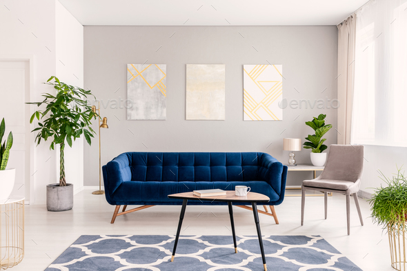 Real Photo Of Plants, Dark Blue Sofa And Posters On The Wall In Stock Photo  By Bialasiewicz