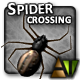 Spider Crossing