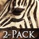 Zebra Wild Africa - VideoHive Item for Sale