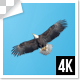 Single Group Of Eagle Birds Flying Top View 4k - VideoHive Item for Sale