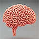 Brains Growth - VideoHive Item for Sale