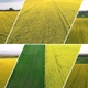 Rapeseed Fields Pack - VideoHive Item for Sale