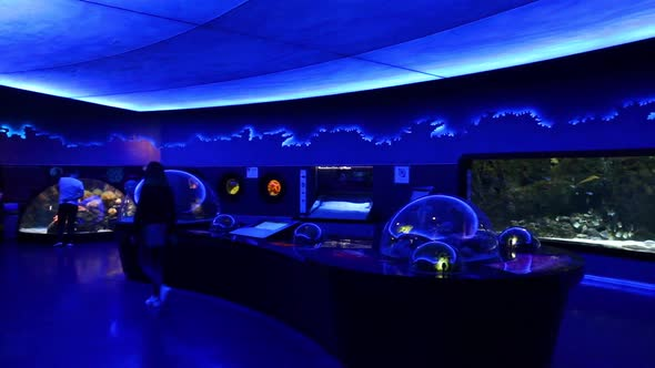 VideoHive Aquarium Tunnel 20402330