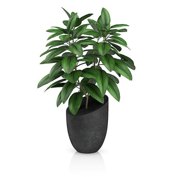 Plant in Black Pot - 3DOcean Item for Sale