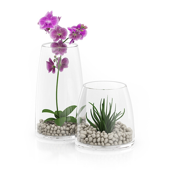 Orchid Flower in Glass Pot - 3DOcean Item for Sale