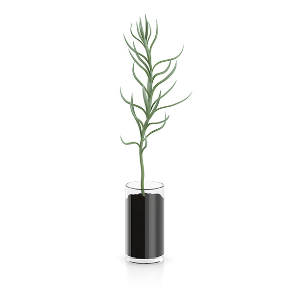 Plant in Glass Pot - 3DOcean Item for Sale