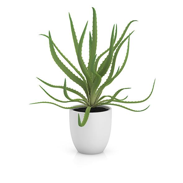 Aloe in White Pot - 3DOcean Item for Sale