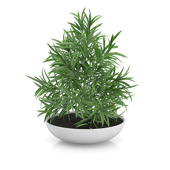 Plant in Flat Pot - 3DOcean Item for Sale