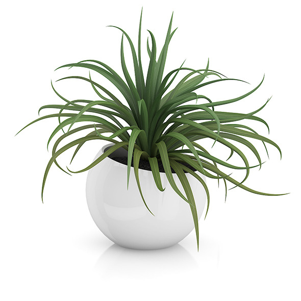 Plant in Sphere Pot - 3DOcean Item for Sale