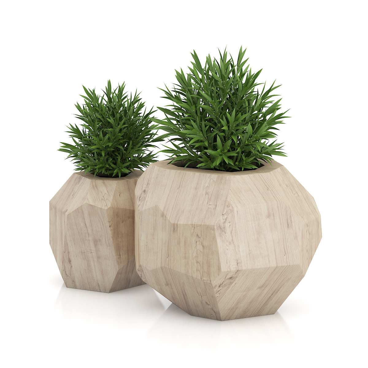 Two Plants In Modern Wooden Pots By Cgaxis 3docean