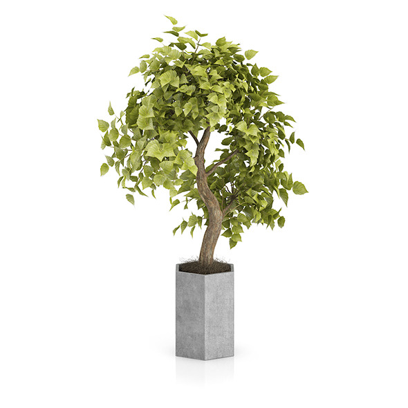 Bonsai Tree in Grey Pot - 3DOcean Item for Sale