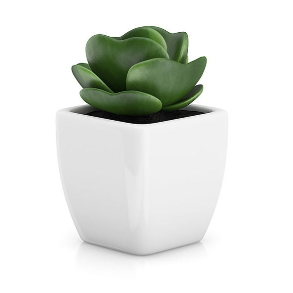 Small Plant in White Pot 2 - 3DOcean Item for Sale