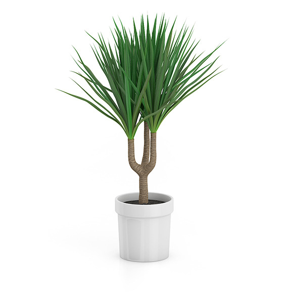 Palm Tree in Round Pot 2 - 3DOcean Item for Sale