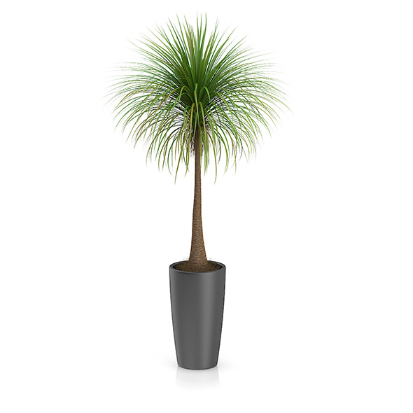 Palm Tree in Round Pot 3 - 3DOcean Item for Sale