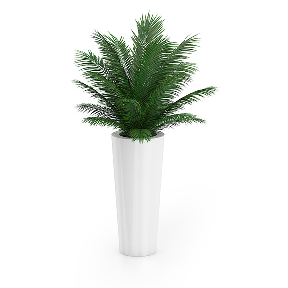 Palm Tree in Round Pot 4 - 3DOcean Item for Sale