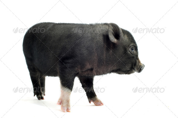 liitle piggy - Stock Photo - Images