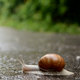Snail Movement - VideoHive Item for Sale