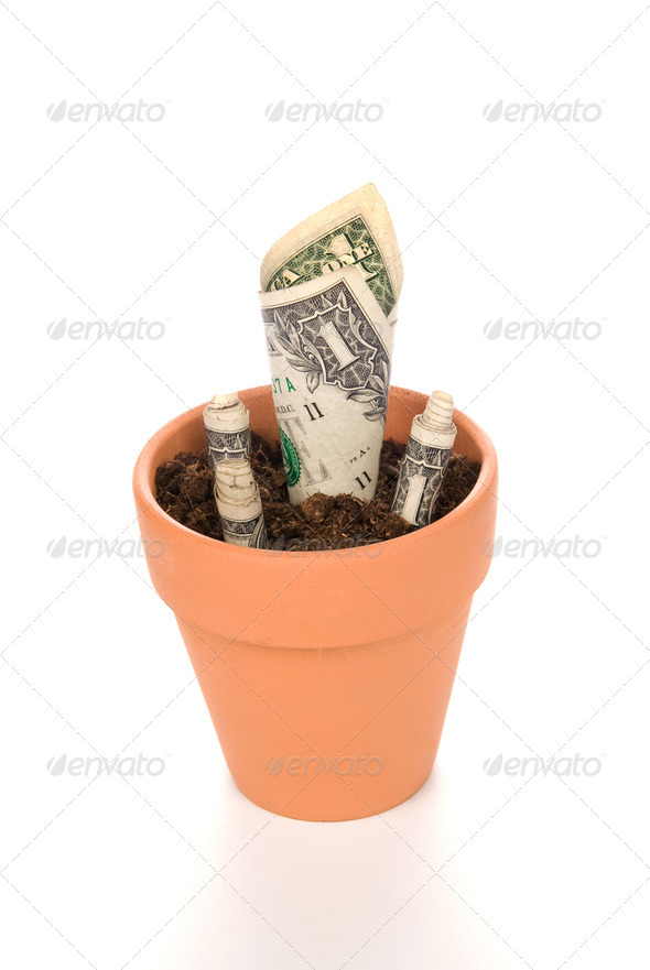 Clay flower pot with cash growing - Stock Photo - Images