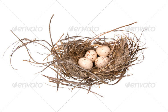 Birds nest - Stock Photo - Images