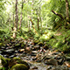 River In A Forest Landscape - VideoHive Item for Sale