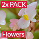 Sweet Flowers 2x Pack - VideoHive Item for Sale